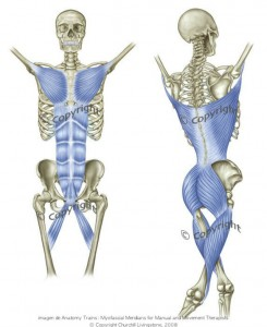 Líneas funcionales. Myers (Anatomy Trains: Myofascial Meridians for Manual and Movement Therapists)