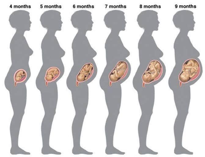 La postura durante el embarazo